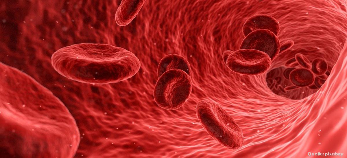 Bluttransporte Bestrahlung